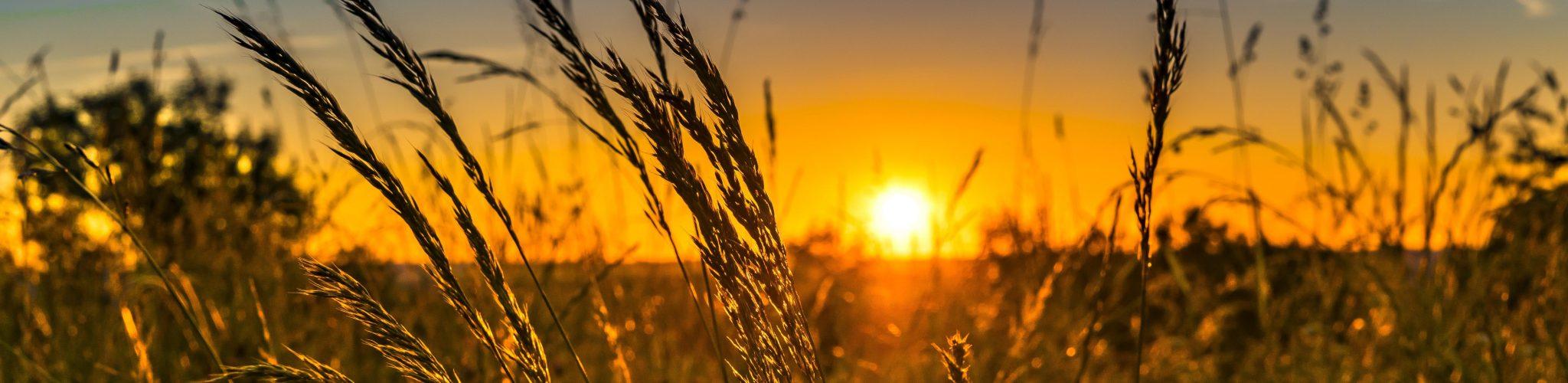 allergie intolleranze alimentari malattie respiratorie