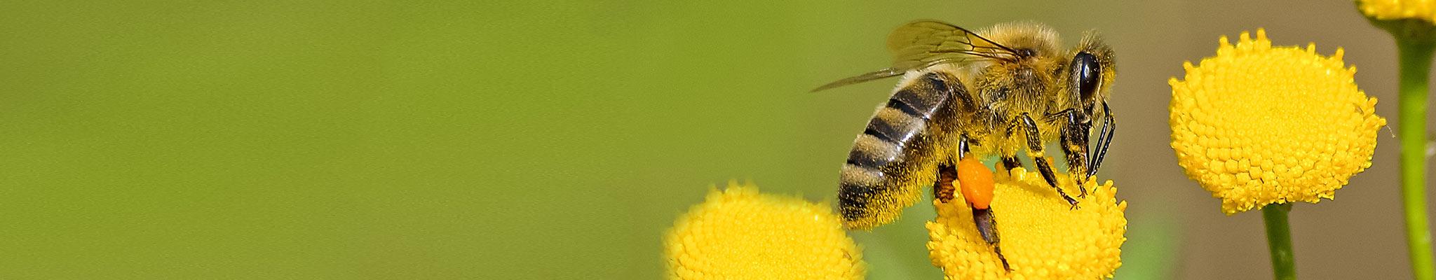 test diagnostici allergie insetti sanremo imperia